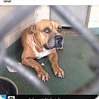 Adopt A Pet :: Baron - Orlando, FL