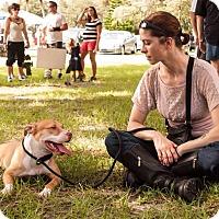 Adopt A Pet :: Celica - Orlando, FL