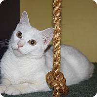 Adopt A Pet :: Kindle (LE) - Little Falls, NJ