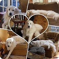 Adopt A Pet :: Zailey - Indian Trail, NC