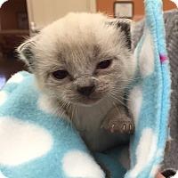 Adopt A Pet :: Rose - Union, KY