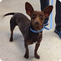 Adopt A Pet :: Omar - Weatherford, TX