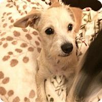 Adopt A Pet :: Kizi - Phoenix, AZ