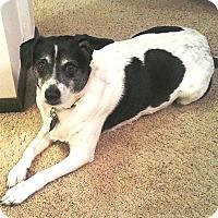 Adopt A Pet :: Rudy - Osseo, MN