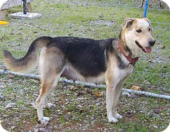 Large Breed Dogs For Adoption In North Carolina