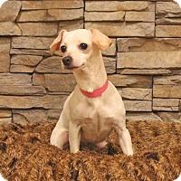 Adopt A Pet :: Pandora - Waldorf, MD