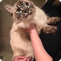 Adopt A Pet :: Slush - Chicago, IL