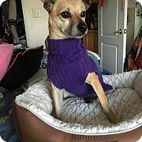 Adopt A Pet :: Sweet Pea - Parlier, CA