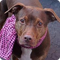Adopt A Pet :: Raina - Staten Island, NY
