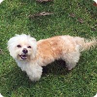 Adopt A Pet :: FERRIS - Los Angeles, CA