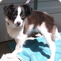 Adopt A Pet :: Radar - Birch Tree, MO