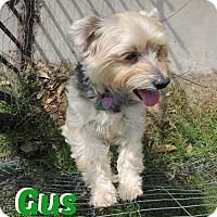 Adopt A Pet :: Gus - Lafayette, LA