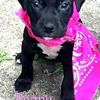 Adopt A Pet :: Penny - Groton, MA