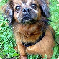 Adopt A Pet :: Coleman - Fennville, MI