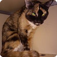 Adopt A Pet :: Squeekie - Franklin, NH