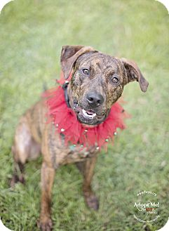 Plott Hound Mix Dog for adoption in Kingwood, Texas - Rocky