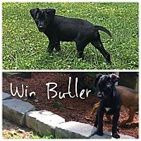 Adopt A Pet :: Win Butler - Jersey City, NJ