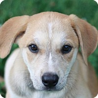 Adopt A Pet :: Mimi - Nanuet, NY