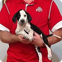 Adopt A Pet :: Stella - New Philadelphia, OH