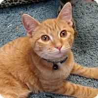 Adopt A Pet :: Belle - Jeannette, PA