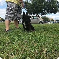 Adopt A Pet :: Ziggy - Brownsville, TX