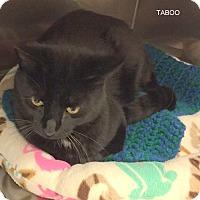 Adopt A Pet :: TABOO - Hibbing, MN