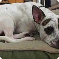 Adopt A Pet :: Jonesey - Boston, MA