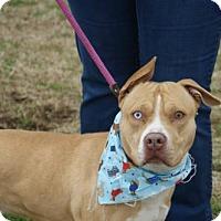 Adopt A Pet :: Prince - Kinston, NC