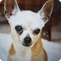 Adopt A Pet :: Eve - San Antonio, TX