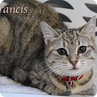 Adopt A Pet :: Francis - Bradenton, FL