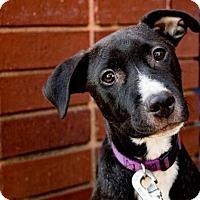 Adopt A Pet :: Mackenzie - Atlanta, GA