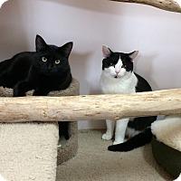 Adopt A Pet :: Wendy - Seattle, WA