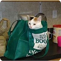 Adopt A Pet :: Miss Pinks - LaGrange, KY