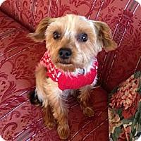 Adopt A Pet :: Reggie - Baton Rouge, LA