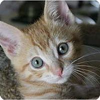 Adopt A Pet :: Jack Paws - Encinitas, CA
