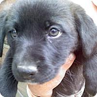 Adopt A Pet :: Parker - Harrisburgh, PA