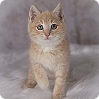 Adopt A Pet :: Pete - Eagan, MN