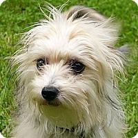 Adopt A Pet :: Guinevere - Mocksville, NC