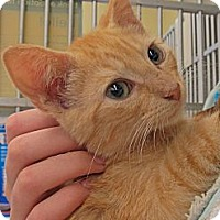 Adopt A Pet :: Erroll - Riverhead, NY