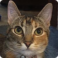 Adopt A Pet :: Buttercup - Winchester, CA