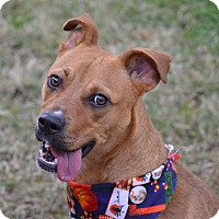 Adopt A Pet :: Titan - Fort Riley, KS