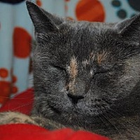 Adopt A Pet :: Baby Girl - Hillsdale, IN
