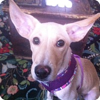 Adopt A Pet :: Marvelous Maddie - Madison, NJ