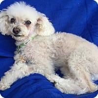 Adopt A Pet :: Harper - Encino, CA