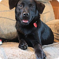 Adopt A Pet :: Erin - in Maine - kennebunkport, ME