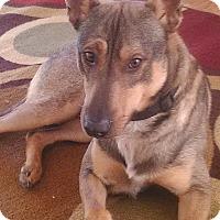 Adopt A Pet :: ABRAHAM - Hurricane, UT