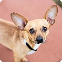 Adopt A Pet :: Cheese - Barnesville, GA