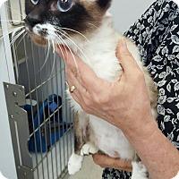 Adopt A Pet :: samantha - Gainesville, GA