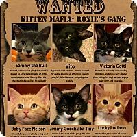 Adopt A Pet :: Vito - Edmond, OK