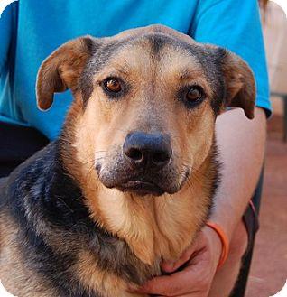 German Shepherd Dog Mix Dog for adoption in Las Vegas, Nevada - Delano